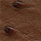 Ostrich - Brown