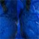 Springbok - Blue