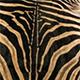 Zebra - Natural