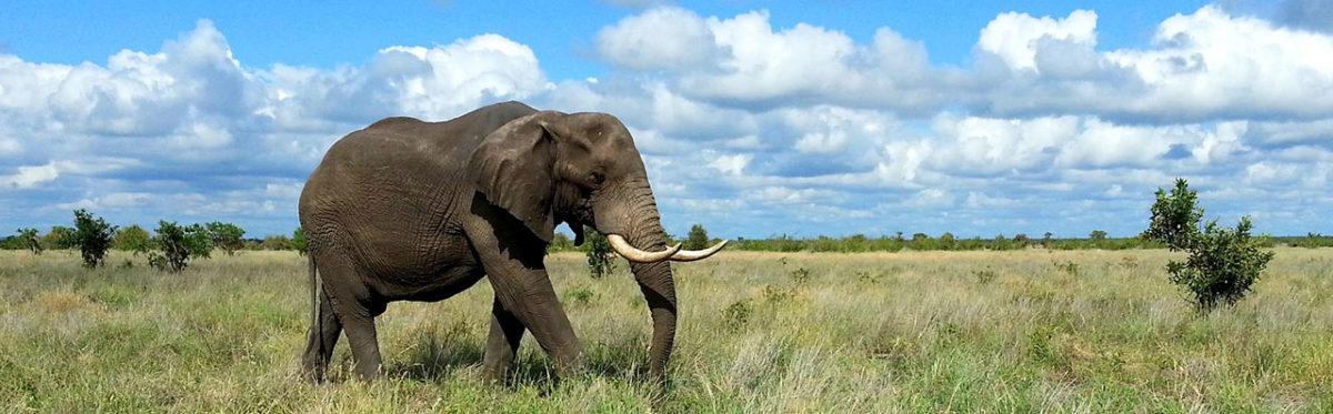 kruger-park-elephant-travel