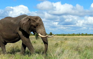 kruger-park-elephant-travel